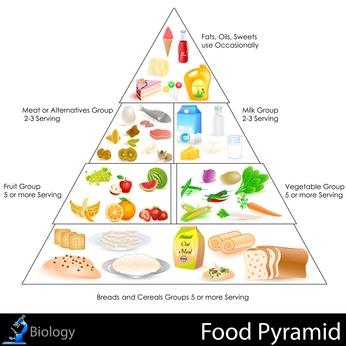 pyramide-aliment.jpg